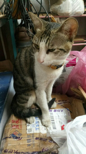 伟嘉 宠物猫粮 成猫全价粮 布偶蓝猫橘猫加菲英短猫咪 牛肉口味1.3kg 晒单图