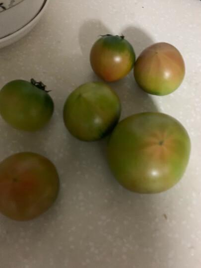 东北新鲜盐碱地草莓柿子 辽宁丹东铁皮西红柿绿腚柿子油柿子番茄 2.5kg 晒单图
