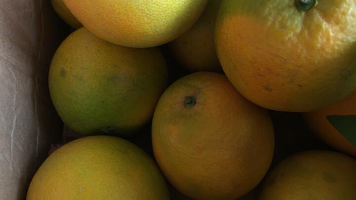 江西赣南脐橙 新鲜橙子水果 12个礼盒装 晒单图