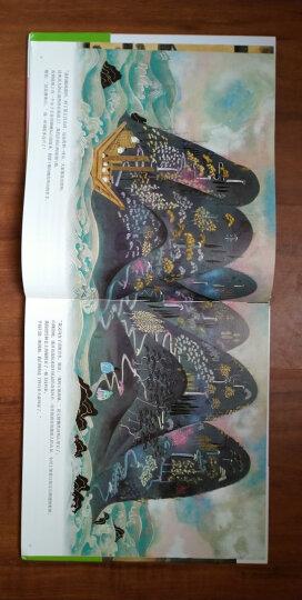 竹林里的青蛙公主 晒单图