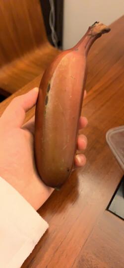 红香蕉5斤装土楼新鲜水果香蕉美人蕉当季红皮红色香蕉 晒单图