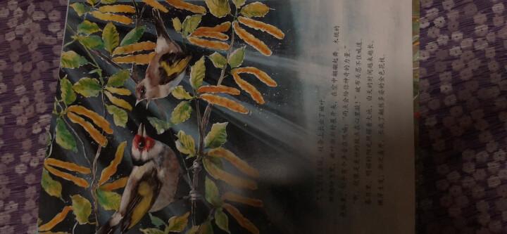 童立方·国际绘本大师经典品质培养:破旧稻草人 晒单图