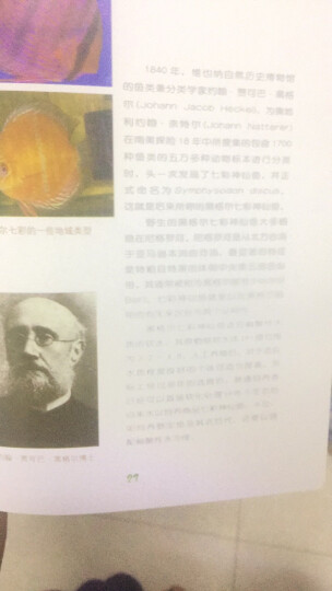 七彩神仙鱼 晒单图