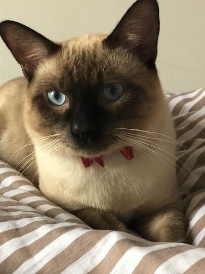 田田猫反光条猫咪铃铛尼龙猫颈带可调节猫项圈安全扣防窒息猫用品 晒单图