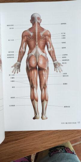 肌肉力量训练彩色图谱 晒单图