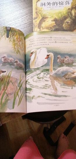 中国名家经典原创图画书乐读本:小蝌蚪找妈妈 晒单图