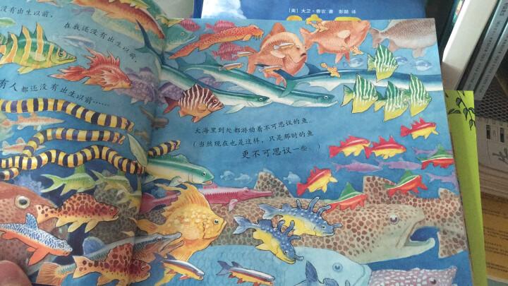 一条聪明的鱼 小学指定书单必备 蒲蒲兰绘本 晒单图