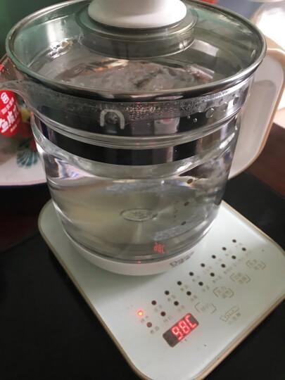 小浣熊养生壶迷你煮茶器电煮花茶壶电热水壶家用煮水壶玻璃养身茶壶 粉色标准款 晒单图