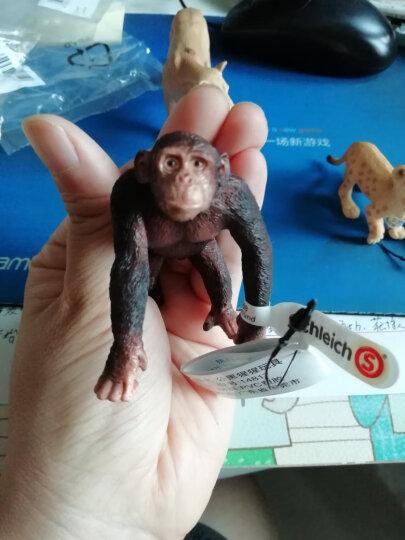 德国思乐Schleich仿真动物迷你模型玩具野生动物系列猩猩猴子等动物玩具孩子礼物成年礼物 小猩猩S14663 晒单图