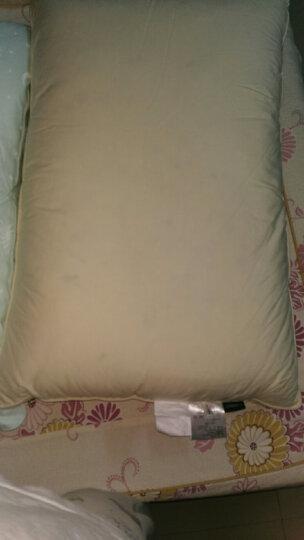 安睡宝(somerelle) 乳胶枕头枕芯  95%鹅绒碎乳胶复合绗缝枕46*72cm 晒单图