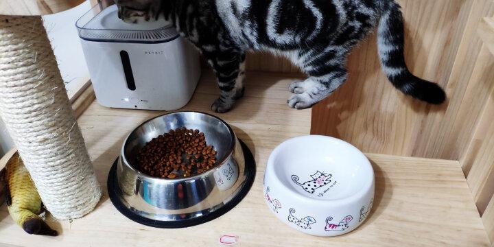 田田猫可爱防打翻陶瓷猫碗猫粮碗猫粮盆猫餐具水碗猫咪用品 晒单图