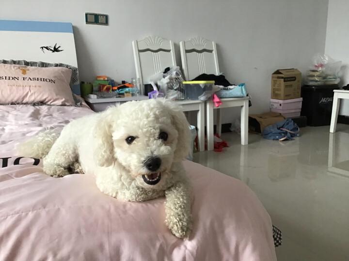 N3 狗粮 泰迪比熊博美法斗成年期小型犬全价狗粮D52-6.8kg 晒单图