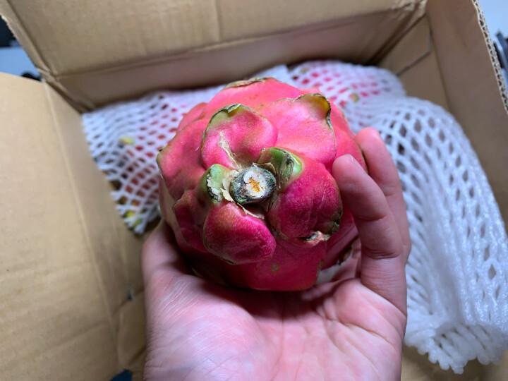 越南进口白心火龙果4个装 中果  单果375-500g  新鲜水果 晒单图