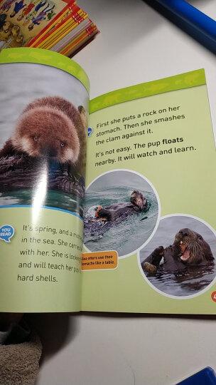 国家地理分级阅读读物 二级:海龟 National Geographic Readers: Sea Turtles 低幼儿童英语启蒙绘本 原版进口 晒单图