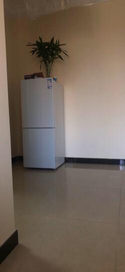 TCL 163升 小型双门电冰箱 净味保鲜 迷你节能 全局光 HIPS环保内胆(芭蕾白)BCD-163KF1 晒单图