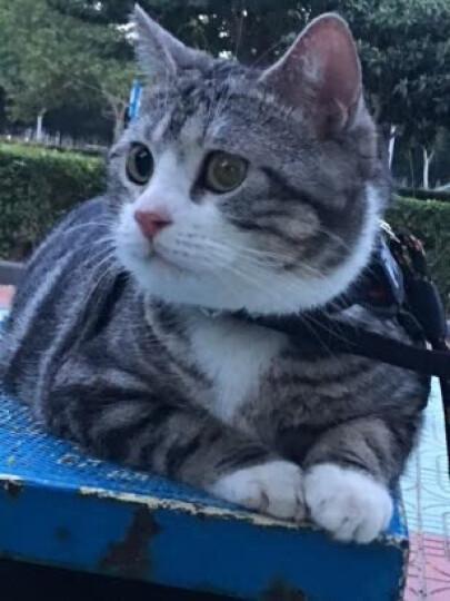 猫零食幼猫猫咪猫薄荷猫草种子木天蓼磨牙棒小鱼干 猫零食小鱼干40g 晒单图