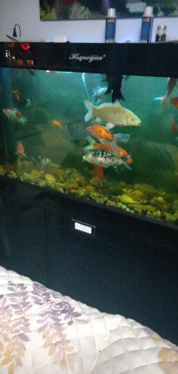森森 4合一净水剂 除藻 净水 去病 杀菌四合一 观赏鱼用 神奇四合一258ml 晒单图