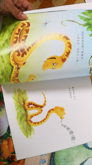 蓝风筝童书迷宫探险记·童话仙子(套装全4册) 晒单图