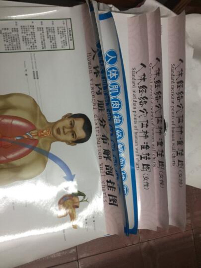 人体肌肉神经系统解剖挂图3张/套西医解剖图 医学卫生保健图 经络穴位挂图 家庭养生保健图 晒单图