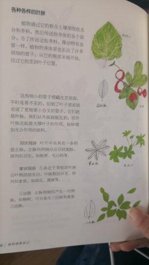 我的大自然观察笔记:植物观察笔记(7-10岁 全国名校小学生原创,7种观察方法+6种绘画方法) 晒单图