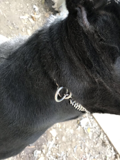 PETCARE  双面抛光 钛钢狗链 狗项圈 狗圈 不锈钢P链大中型 线径2.5 总长50 晒单图