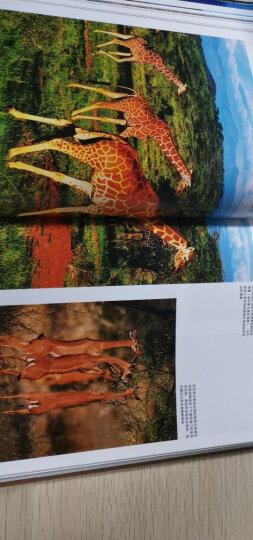 美丽的地球:南美洲 晒单图