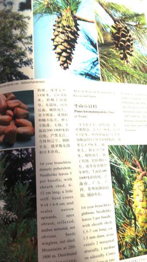 中国高等植物彩色图鉴  第二卷  蕨类植物—裸子植物 晒单图