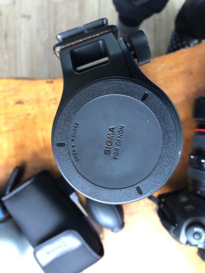 适马(SIGMA)150-600mm F5-6.3 DG OS HSM|Contemporary 全画幅 远摄变焦镜头 打鸟荷花(佳能单反卡口) 晒单图