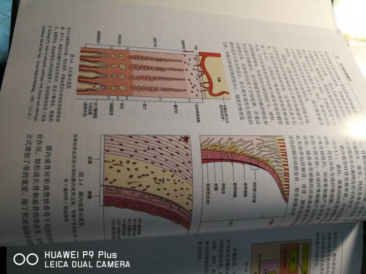 实用骨科影像学(翻译版)(原书第5版) 晒单图