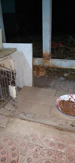 凯麦特猫罐头红肉大罐 幼猫成猫湿粮宠物猫零食罐头 猫咪猫粮鱼肉鸡肉375g* 肉冻型吞拿鱼小银鱼80g单罐 晒单图