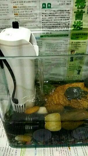森森(SUNSUN)油膜处理过滤器 JY-03 小鱼缸增氧过滤器 晒单图