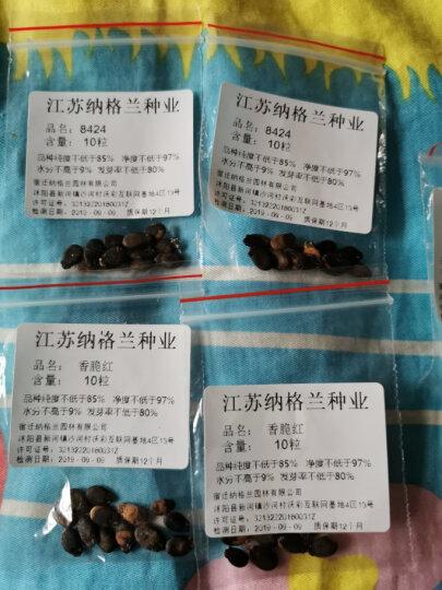 纳格兰 绿植 瓜果种子 西瓜 香瓜 哈密瓜 甜瓜 苹果 火龙果 橘子种子水果种子 家庭瓜果种子 羊角脆 10粒 晒单图
