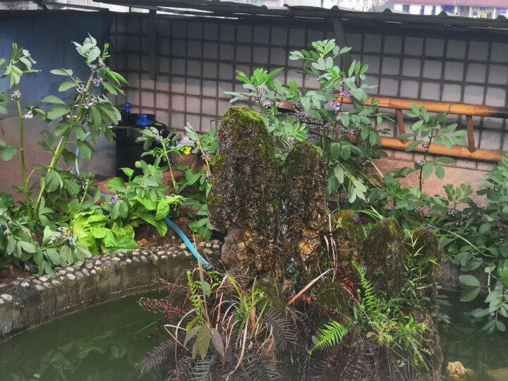 森森鱼缸过滤器大型鱼池过滤桶锦鲤池净化器水池循环设备过滤系统 CPF适合3立方水过滤套餐 晒单图