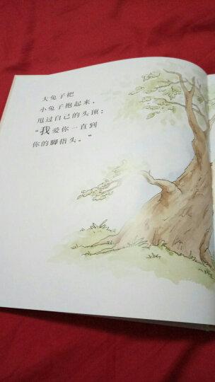 信谊绘本世界精选图画书:猜猜我有多爱你 晒单图