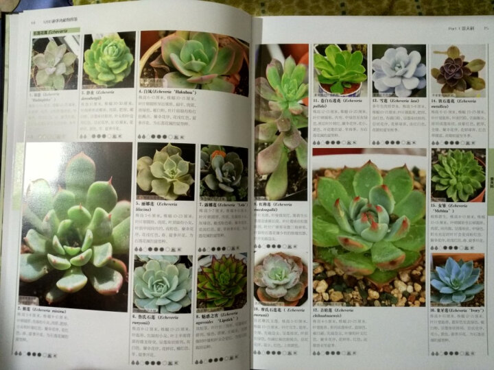 1200种多肉植物图鉴(汉竹) 晒单图