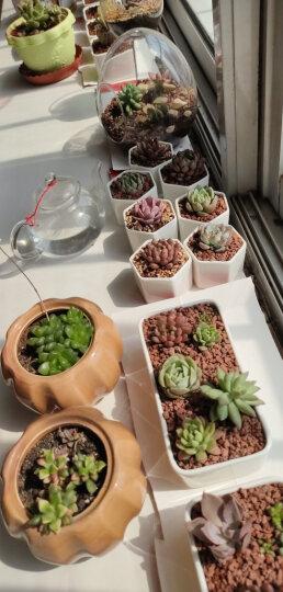 云南直发MuMuHome多肉植物花盆创意肉肉简约长方形多肉花盆白瓷盆多肉陶瓷 10格木盒套装(不含植物和土) 晒单图