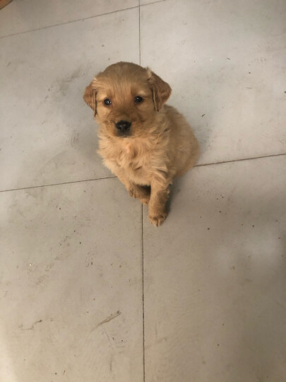 MAG 宠物奶粉400g 刚出生的 小狗 喝的 大狗 怀孕犬 通用 泡狗粮 低敏 羊奶粉 狗奶粉 晒单图