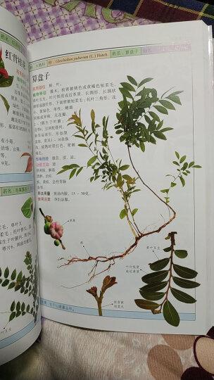 自然珍藏图鉴丛书:南方药用植物 晒单图