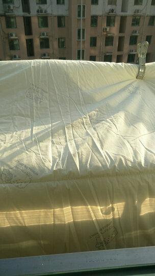 恒源祥家纺 泰国天然乳胶床垫立体榻榻米可折叠床垫子单双人软垫1.5/1.8米床垫子 仙草灰5cm 1.8米/180*200cm 晒单图
