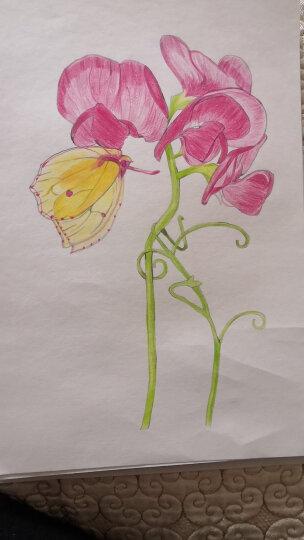 《彩铅花卉》入门教程书籍花卉手绘画零基础自学填涂色书成人绘画美术创意简单铅笔技法本花草风景山水多 晒单图