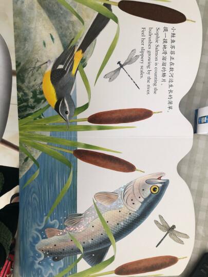亮丽精美触摸书系列:小水獭奥斯卡(中英双语 ) 晒单图