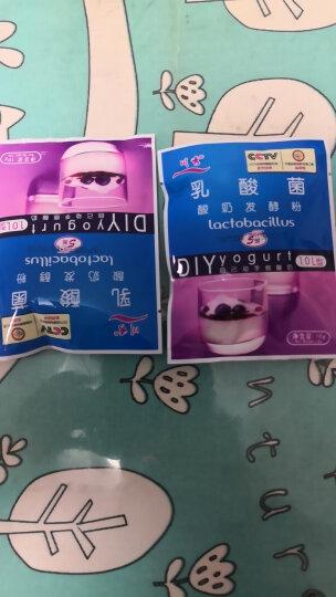 川秀(进口乳酸菌型)自制酸奶发酵菌粉 酸奶菌种发酵剂10g 晒单图