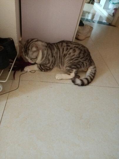 田田猫彩色羽毛钓猫透明吊钓鱼杆逗猫棒鸡毛逗猫杆猫玩具猫用品 晒单图