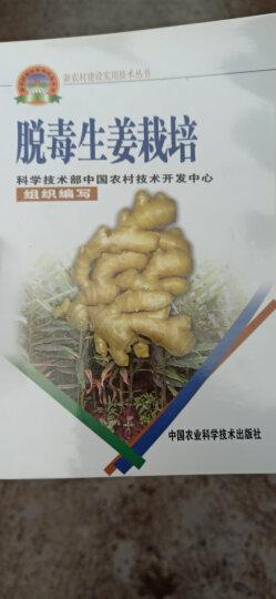 新农村建设实用技术丛书:脱毒生姜栽培 晒单图