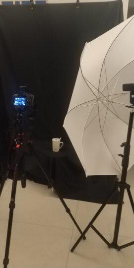 金贝ECV-400影室闪光灯摄影灯 电商影楼人像产品拍照灯 摄影棚拍摄补光灯 晒单图