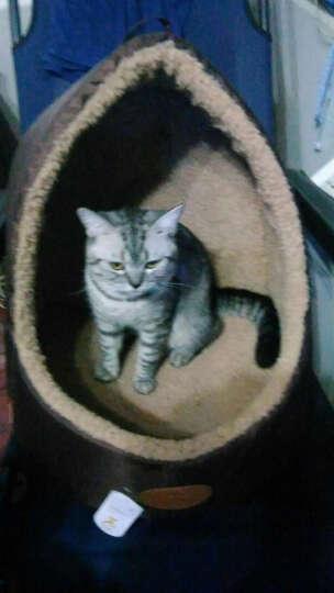 田田猫 紫色 反光条铃铛尼龙猫颈带猫项圈(安全扣设计)加菲 布偶 英短 暹罗 蓝猫猫用品 晒单图