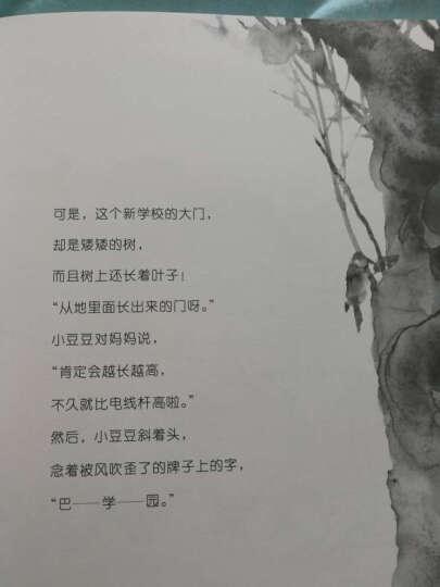 绘本窗边的小豆豆(套装共2册) (爱心树童书) 晒单图