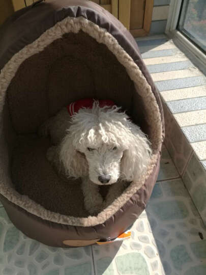 华元宠具(hoopet)小型犬狗窝泰迪比熊秋冬宠物窝蒙古包猫咪垫子M 晒单图