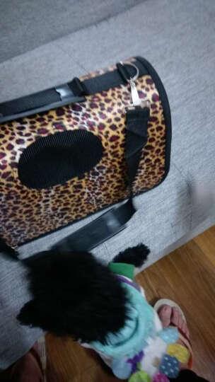 文宠  宠物包猫咪背包泰迪外出便携旅行包狗狗包包猫猫包猫笼袋子箱用品 M-中型适合  5-9斤(颜色随机发货) 晒单图