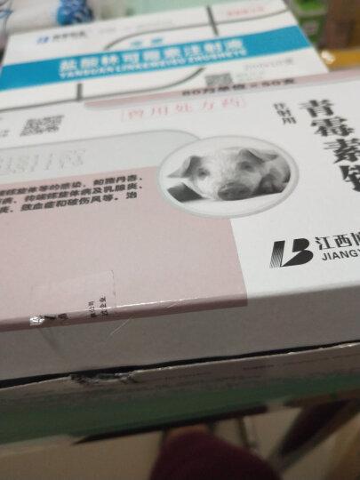博莱药业  80万单位青霉素钾注射粉针 抗菌消炎水肿肺炎 猪马牛羊鸡犬兽药 50支*1盒 晒单图